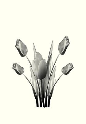 Tulip Digital Art - Black And White Tulips Drawing by David Dehner