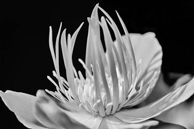 Photograph - Black And White Universe by Tomasz Dziubinski