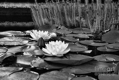 Art Print featuring the photograph Black And White Version by John S