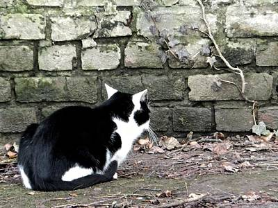 Photograph - Black And White Waiting Cat by Marc Philippe Joly