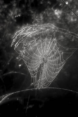 Photograph - Black And White Web by Robert Camp