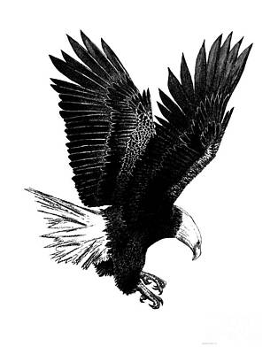 Black And White With Pen And Ink Drawing Of American Bald Eagle  Original by Mario Perez
