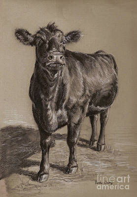 Cow Wall Art - Drawing - Black Angus Cow 1 by Nicole Troup