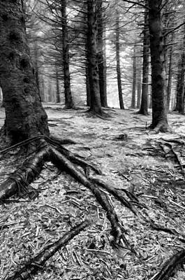 Black Photograph - Black Balsam Knob Forest by Donnie Bagwell