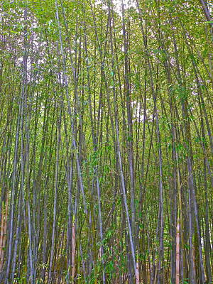 Photograph - Black Bamboo Heights by Eve Spring