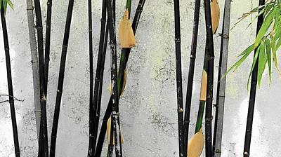 Black Bamboo #2 Sarasota Art Print