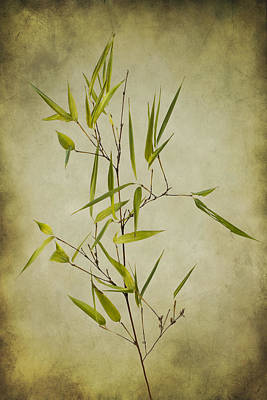 Photograph - Black Bamboo Stem. by Clare Bambers