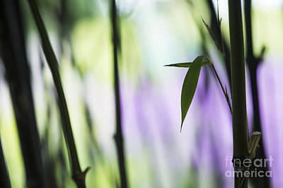 Bamboo Photograph - Black Bamboo by Tim Gainey