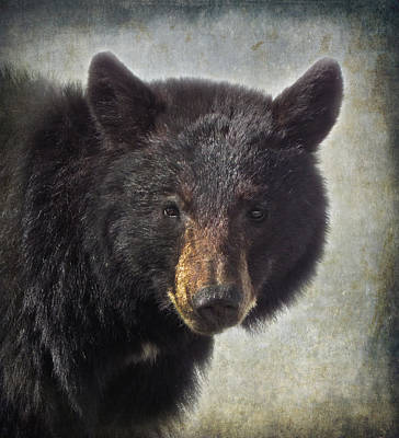 Photograph - Black Bear by Angie Vogel