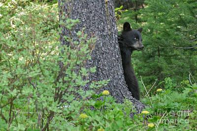 Photograph - Black Bear Baby by Charles Kozierok
