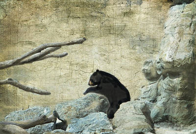 Photograph - Black Bear  by Betty  Pauwels