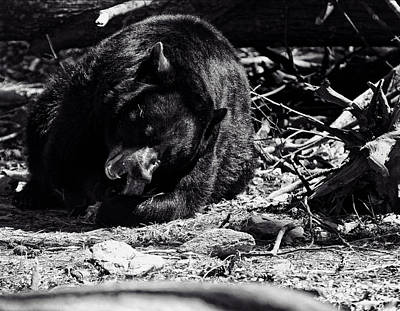 Photograph - Black Bear by Chris Flees