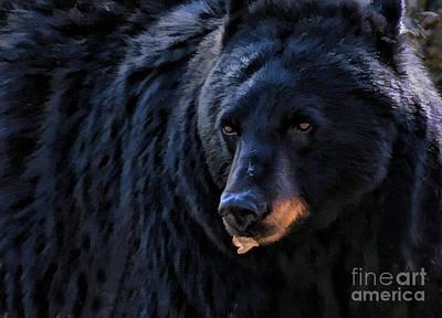 Black Bear Art Print by Clare VanderVeen