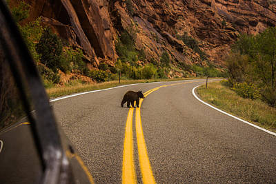 Kim Baker Photograph - Black Bear Cub Red Canyon by Kim Baker
