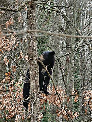 Art Print featuring the photograph Black Bear Cub by William Tanneberger