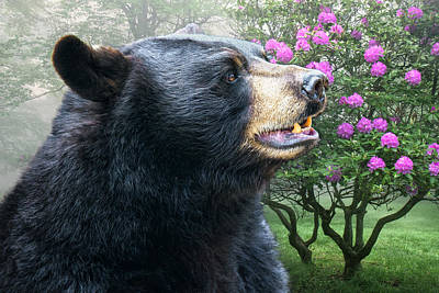 Photograph - Black Bear In Spring by Mary Almond