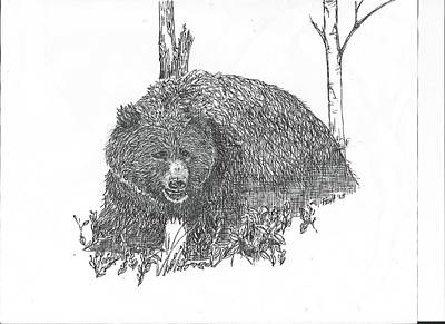 Ursus Drawing - Black Bear by Mary Fish