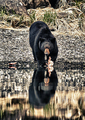 Photograph - Black Bear Reflection by Ted Raynor