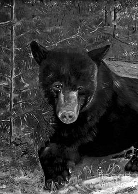 Painting - Black Bear - Scruffy - Black And White Cropped Portrait by Jan Dappen