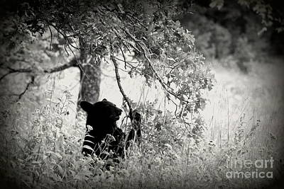 Photograph - Black Bear Sitting by Cynthia Mask