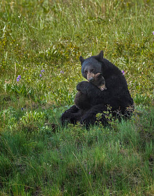 Photograph - Black Bear Sow Hugging Cub by Mark Steven Perry