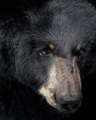 Black Bear Art Print by TnBackroadsPhotos