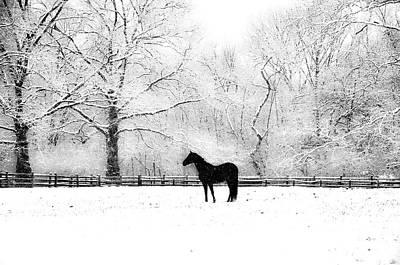 Snowy Digital Art - Black Beauty by Bill Cannon