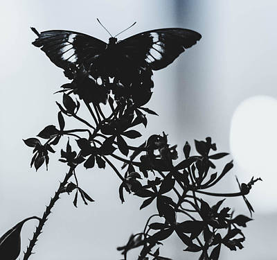 Photograph - Black Beauty by Sara Frank