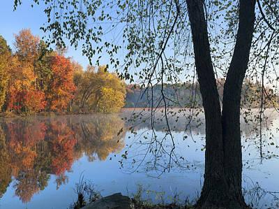 Nigra Photograph - Black Birch Along Lake Bailee In Petit by Tim Fitzharris