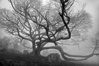 Photograph - Black Birch In The Fog 02 by Jim Dollar
