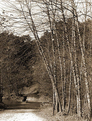 Black Birches, Zoo Park National Zoological Park Art Print by Litz Collection
