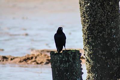 Photograph - Black Bird by Jessica Brown