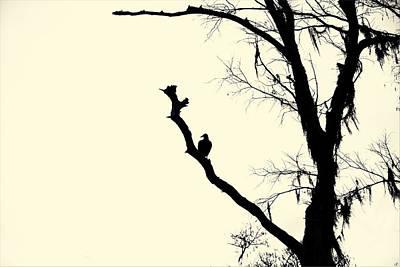 Bigfoot Photograph - Black Bird by John Hesley