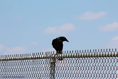 Photograph - Black Bird by Nance Larson
