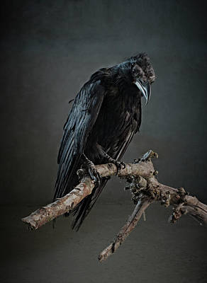 Photograph - Black Bird Perched On An Old Branch by Zena Holloway