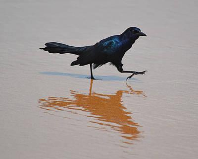 Black Bird - Strutting At The Beach Art Print