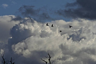 Photograph - Black Birds Dark Sky by SC Heffner