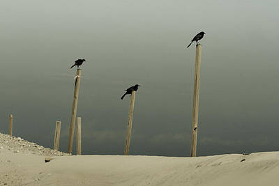 Photograph - Black Birds  by Gray  Artus