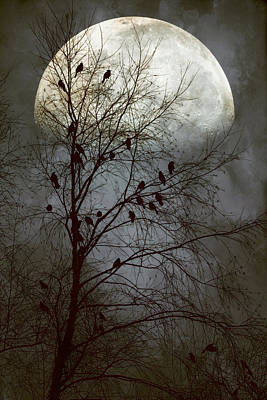 Black Birds Singing In The Dead Of Night Art Print