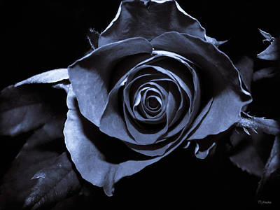 Black Blue Rose Art Print