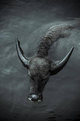 Photograph - Black Buffalo by Soren Egeberg