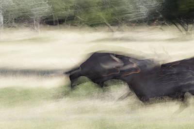 Natuur Photograph - Black Bulls In France by Ronald Jansen