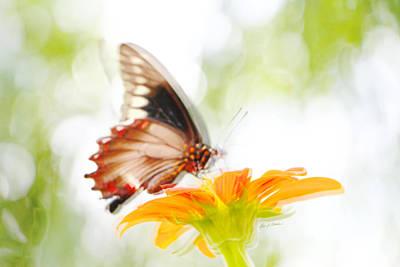 Black Butterfly In Motion I Art Print