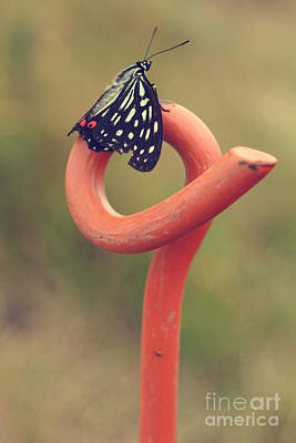 Photograph - Black Butterfly With White And Orange Markings On Metal Pole by Beverly Claire Kaiya