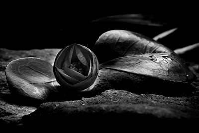 Photograph - Black Camellia by Edgar Laureano