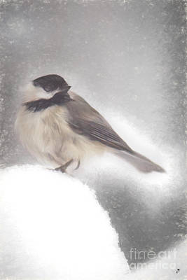 Photograph - Black Capped Chickadee by Sandra Clark