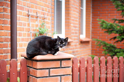 One Lonely Stray Black Cat Sitting On Fence  Art Print by Arletta Cwalina