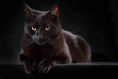 Black Cat Art Print by Dirk Ercken
