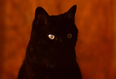 Photograph - Black Cat Eye Glow by Robert  Rodvik
