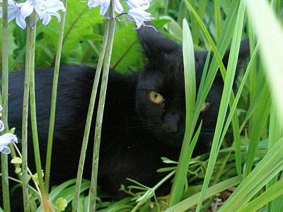 Black Cat In Long Grass Art Print